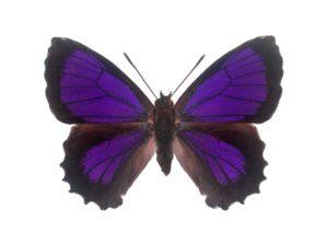 Dark Purple Azure