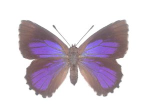 Bright Purple Azure