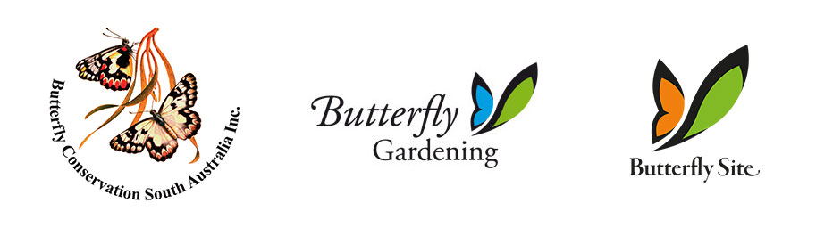 Butterfly Conservation South Australia