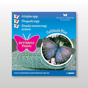 plant-tag-Saltbush-Blue