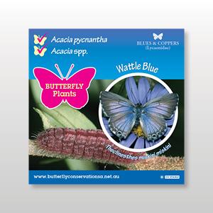 plant-tag-Wattle-Blue